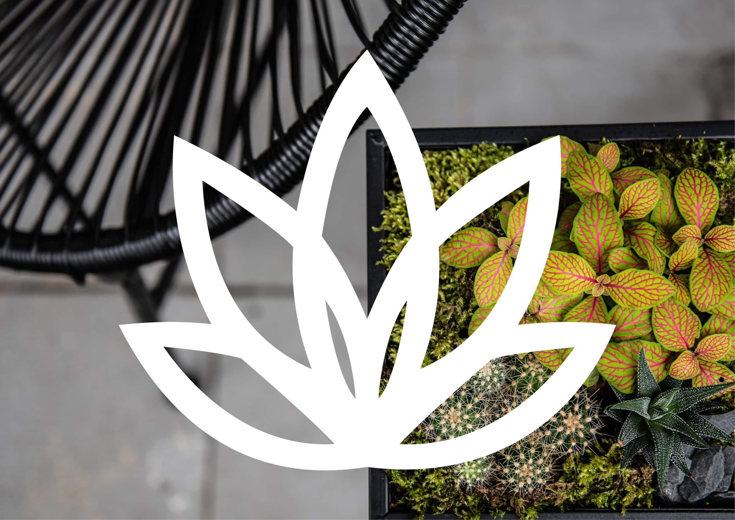 Logoentwicklung für nachhaltige und kreative Pflanzen Dekoration: Bildmarke Stachelblatt